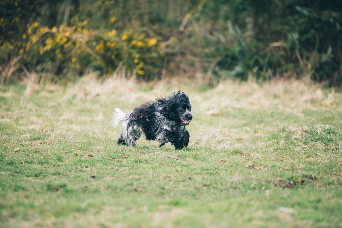 Dog Photography-73